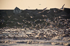 5 seagulls Στοκ Εικόνα