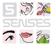 5 senses. All human five senses illustration Royalty Free Stock Photo
