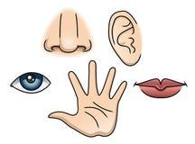 5 sentidos fijados stock de ilustración