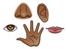 5 sentidos fijados ilustración del vector