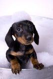5 skąpań pies Obraz Royalty Free