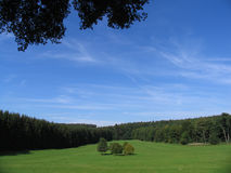 5 skog omgivna trees Arkivbilder