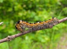 5 täta övre för caterpillar Royaltyfri Fotografi