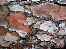 5 texturerade organiska för bakgrund Royaltyfria Foton