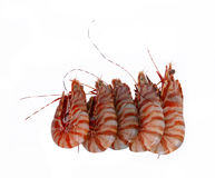 5 tiger prawns Stock Image
