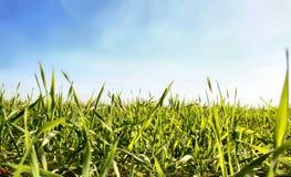 5 trawy. Zdjęcia Royalty Free