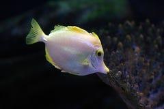5 tropikalnych ryb Zdjęcie Royalty Free