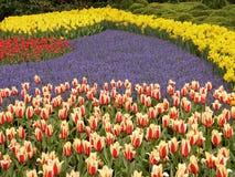 5 tulipan pola Fotografia Stock