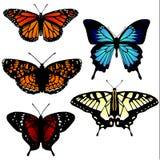 5 vlinderillustraties Royalty-vrije Stock Foto's