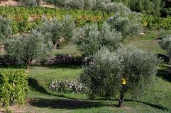 5 winnica Provence Zdjęcia Stock