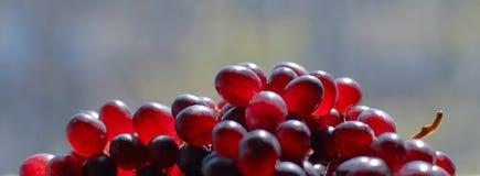5 winogron Zdjęcia Stock