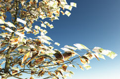 50 and 100 euro bills instead of the leaves. Close up of a tree with 50 and 100 euro bills instead of the leaves on the left and the blue sky on background vector illustration