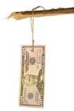 50 dólares de Tag Fotografia de Stock