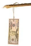 50 dollarsmarkering Stock Fotografie