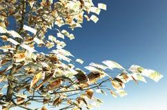 50 en 100 euro rekeningen in plaats van de bladeren Stock Foto