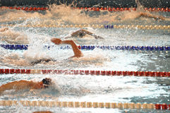 50 metres freestyle race at a competition. Male swimmers at a competition swimming a 50 m freestyle race, front crawl.  XVe French Winter Open Masters Stock Photos
