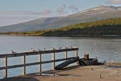 50 norr norway Royaltyfria Foton