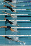 50m start 3. Several swimmers dive into the pool at the start off the race Stock Photo