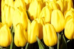 51 цветок Стоковые Фото