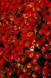 52朵花 免版税库存照片