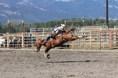 52nd årliga pro rodeo Royaltyfri Foto