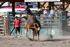 52nd årliga pro rodeo Royaltyfri Bild
