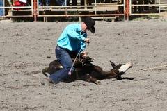 52nd årliga pro rodeo Arkivbild