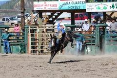 52nd årliga pro rodeo Royaltyfri Fotografi
