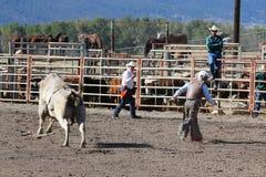 52nd årliga pro rodeo Royaltyfria Bilder