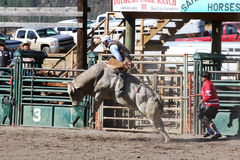 52nd årliga pro rodeo Arkivfoto