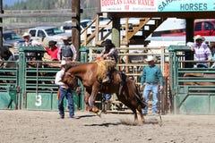 52nd årliga pro rodeo Arkivbilder
