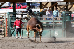52nd Annual Pro Rodeo Royalty Free Stock Image