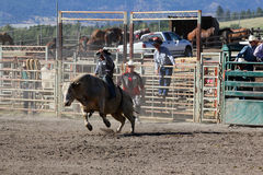 52nd Annual Pro Rodeo. MERRITT, B.C. CANADA - SEPTEMBER 3: Cowboy during bull riding event at The 52nd Annual Pro Rodeo September 3, 2011 in Merritt British Stock Images