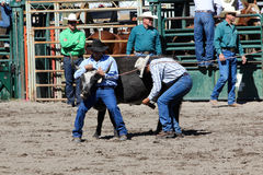52nd Annual Pro Rodeo Stock Photography