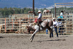 52nd Annual Pro Rodeo. MERRITT, B.C. CANADA - SEPTEMBER 3: Cowboy during saddle bronc event at The 52nd Annual Pro Rodeo September 3, 2011 in Merritt British Stock Images