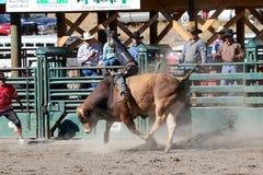 52nd Pro rodeio anual Imagem de Stock