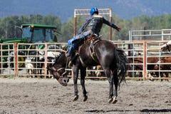 52nd Pro rodeio anual Imagem de Stock Royalty Free