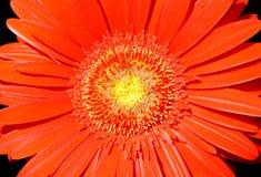 53 λουλούδια Στοκ Φωτογραφίες