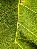 54 зеленых листь Стоковое Изображение