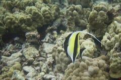 568 rafa koralowa zdjęcie stock
