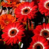 57 цветков Стоковое фото RF
