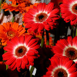 57 blommor Royaltyfri Foto