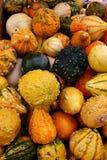 5711 gourds Стоковые Изображения RF