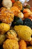 5729 gourds Стоковое Изображение RF