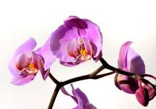 58 blommor Royaltyfri Bild