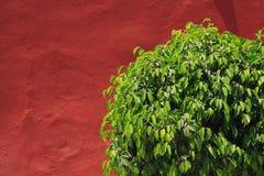 5945灌木 免版税库存图片