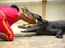 5条鳄鱼农厂samutprakan动物园 库存照片