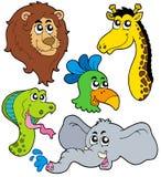 6个动物收集动物园 免版税库存照片
