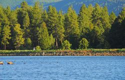 6个森林湖 免版税库存图片