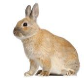 6个矮小的月兔子 免版税库存图片
